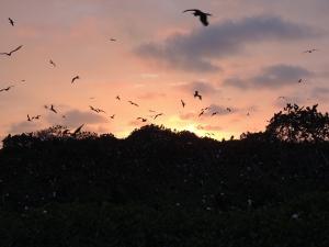 Sunset en la Isla de los Pájaros