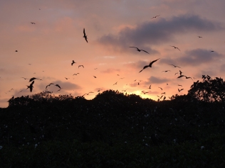 Atardecer en Isla de los Pájaros