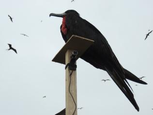 Macho arriba del poste con cámara