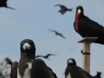 Aves curiosas